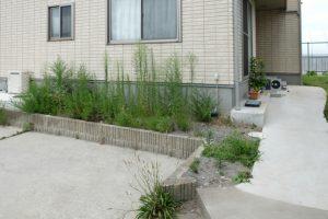 雑草が生い茂った玄関前